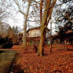 Ceai de iarnă la Buziaș sau cum am început anul