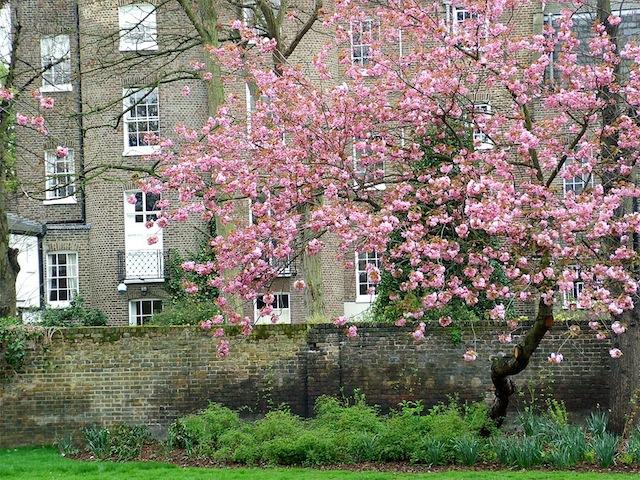 london-spring-blossom