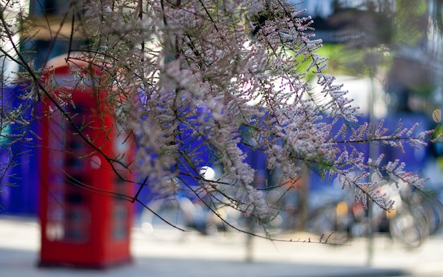 spring-in-london_kulor_nc