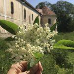Anotimpul florilor de soc la Castelul Rákóczi-Bánffy