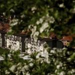 Cum arată un sat din mediul urban